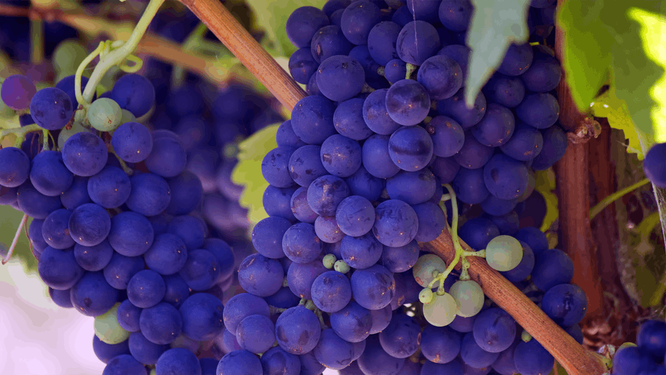 purple veg