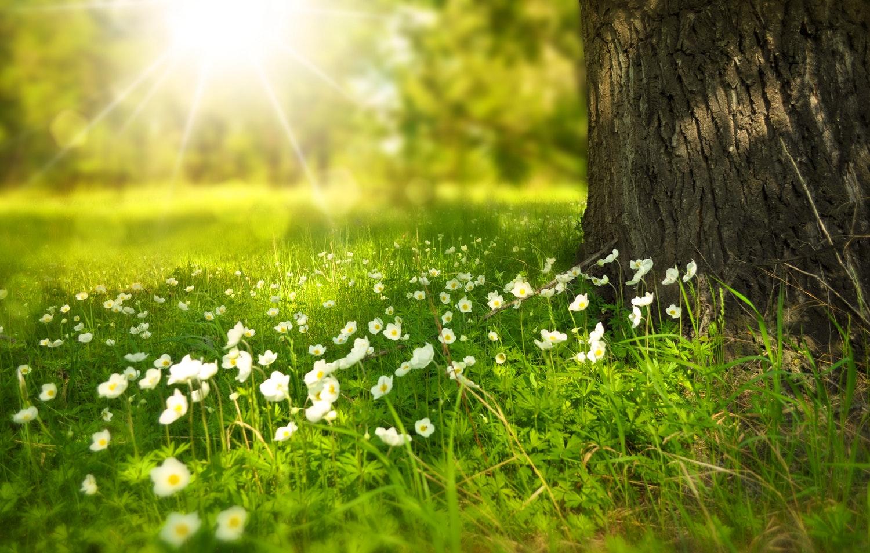 Солнечный витамин  D:  как избежать дефицита